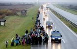 epa05628456 Hundreds of migrants march from Belgrade to Croatian border on the highway Belgrade-Zagreb near Pecinci 50km from Belgrade, Serbia, 12 November 2016. According to reports, hundreds of migrants from Middle East countries marched through the Serbian capital, apparently trying to move towards Croatia, in order to reach western European countries. EPA/KOCA SULEJMANOVIC